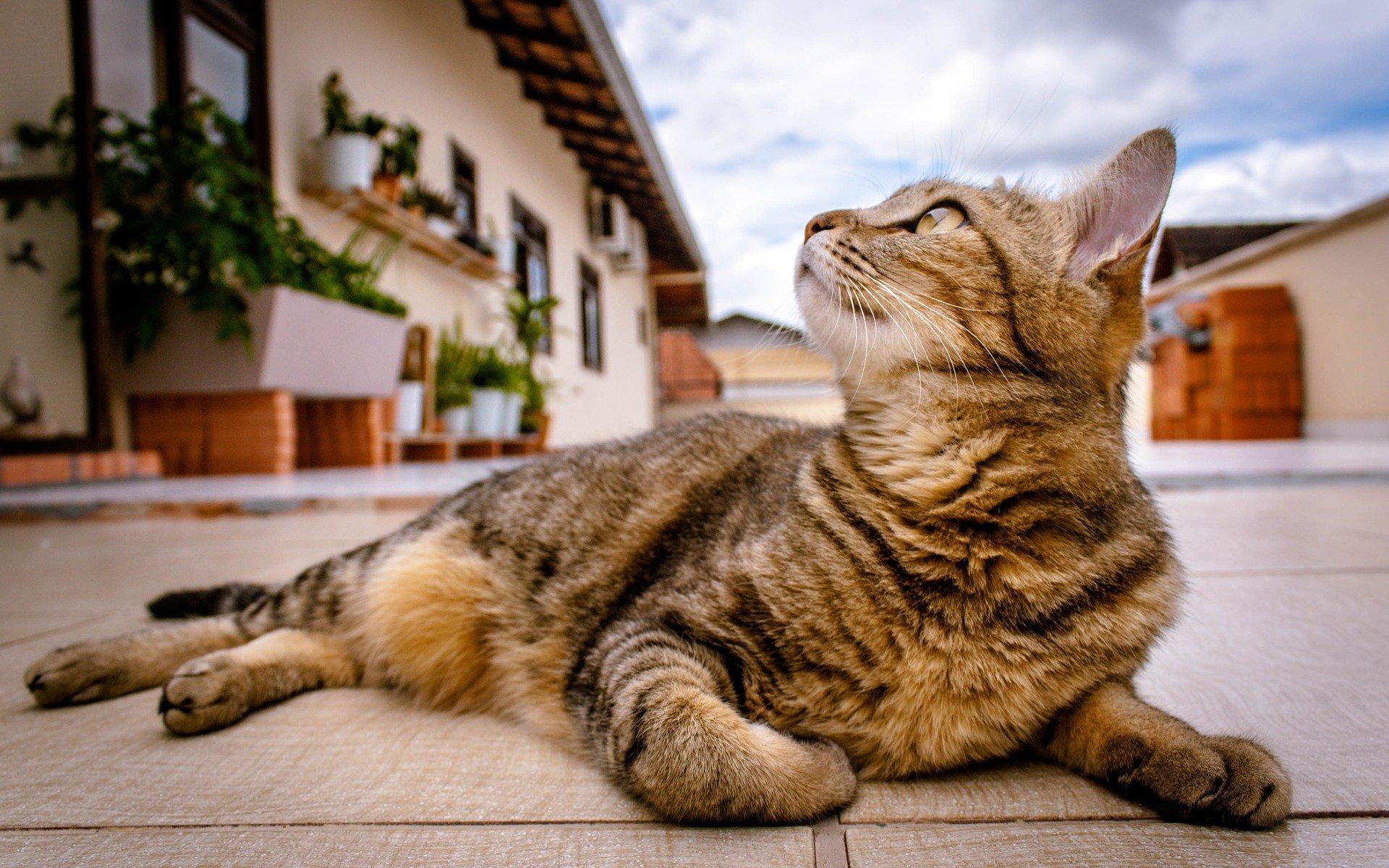 So entfernen Sie tierische Gerüche aus Wohnung & Polstern
